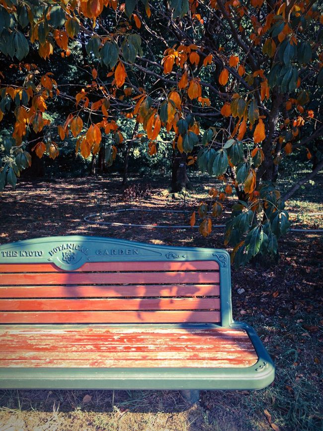 Leaf Earlyautumn Tree Outdoors Autumn Colors Bench
