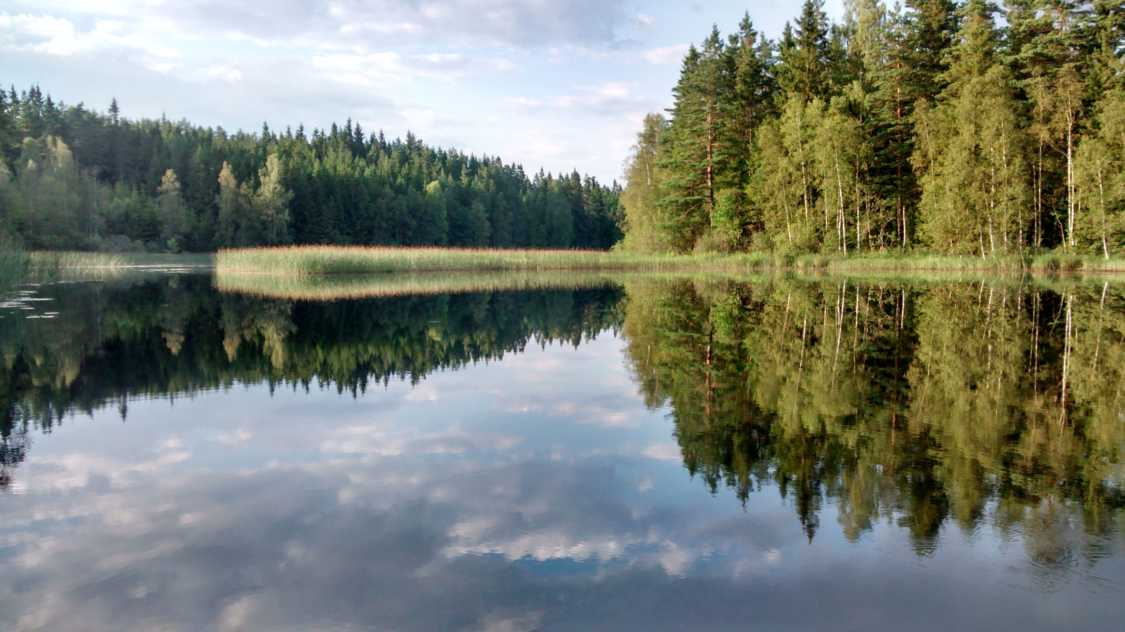 reflection, tree, water, tranquil scene, tranquility, lake, scenics, beauty in nature, sky, waterfront, standing water, nature, idyllic, symmetry, growth, calm, cloud - sky, cloud, day, green color