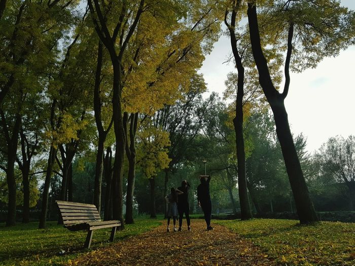 autumn, my favourite season of the year♡ Tree Nature Autumn Beauty In Nature Leaf Park - Man Made Space Day Tree Trunk Outdoors Real People People Branch Sky Only Men One Person Adult Adults Only