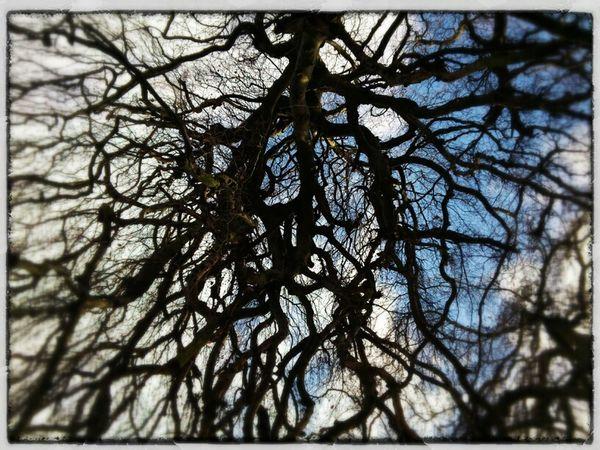 TreePorn Lookingup