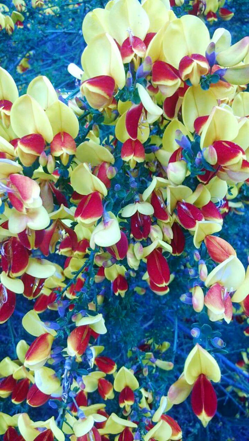 Belleza Belleza De La Naturaleza Enamorate❤ Conejitos Amarillos Beauty In Nature Naturaleza Fascinante Flores Y Más Flores