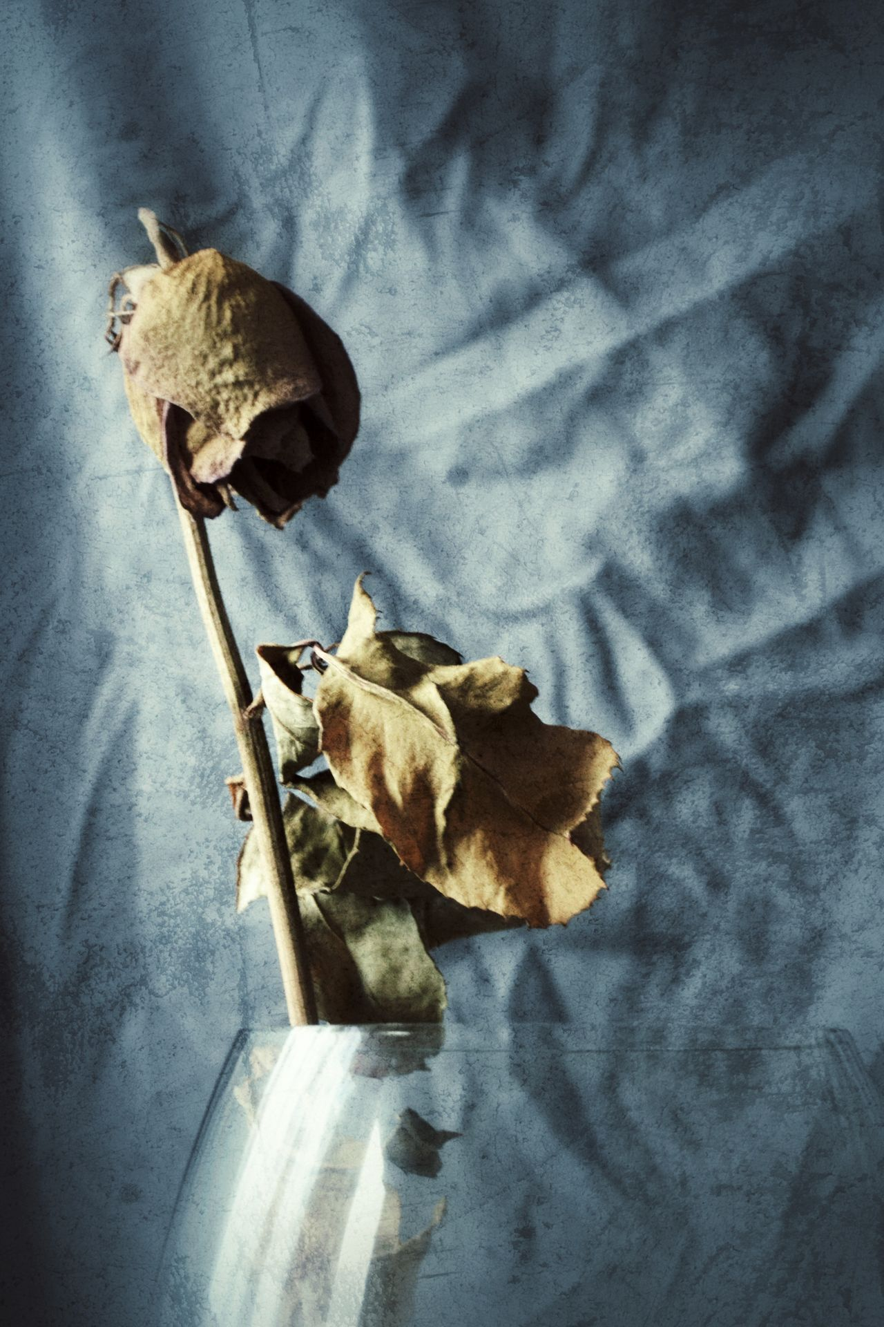 No People Textile Crumpled Paper Indoors  Leaf Close-up Day Nature Roses Dead Leaves Dead Flowers DeadRoses Flower Head Klaipeda
