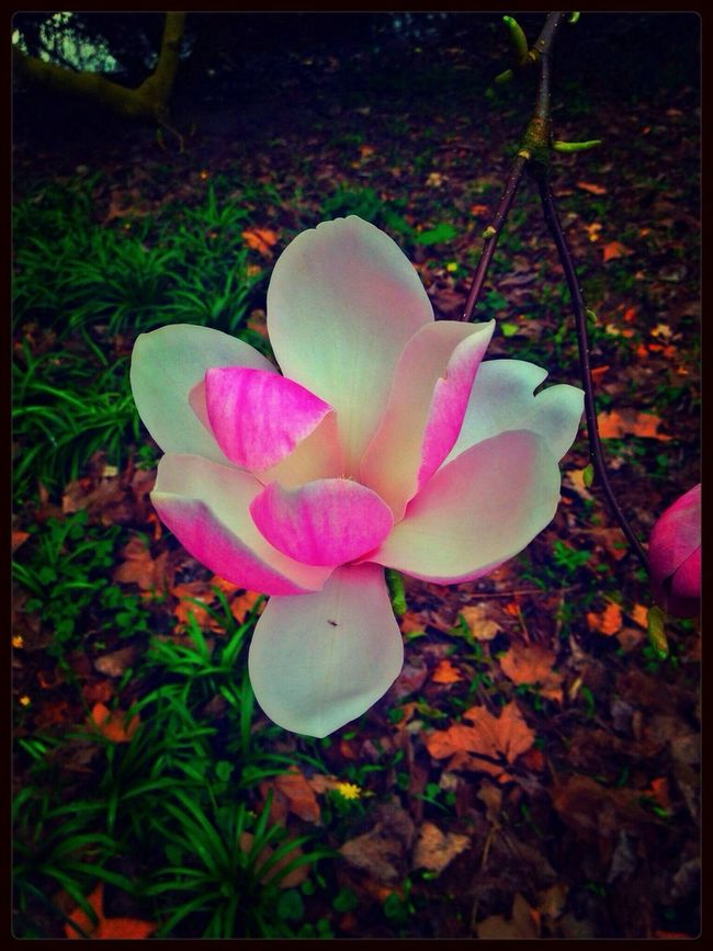Art Is Portable With Caseable Art Is Portable With A Caseable Magnolia Colorful