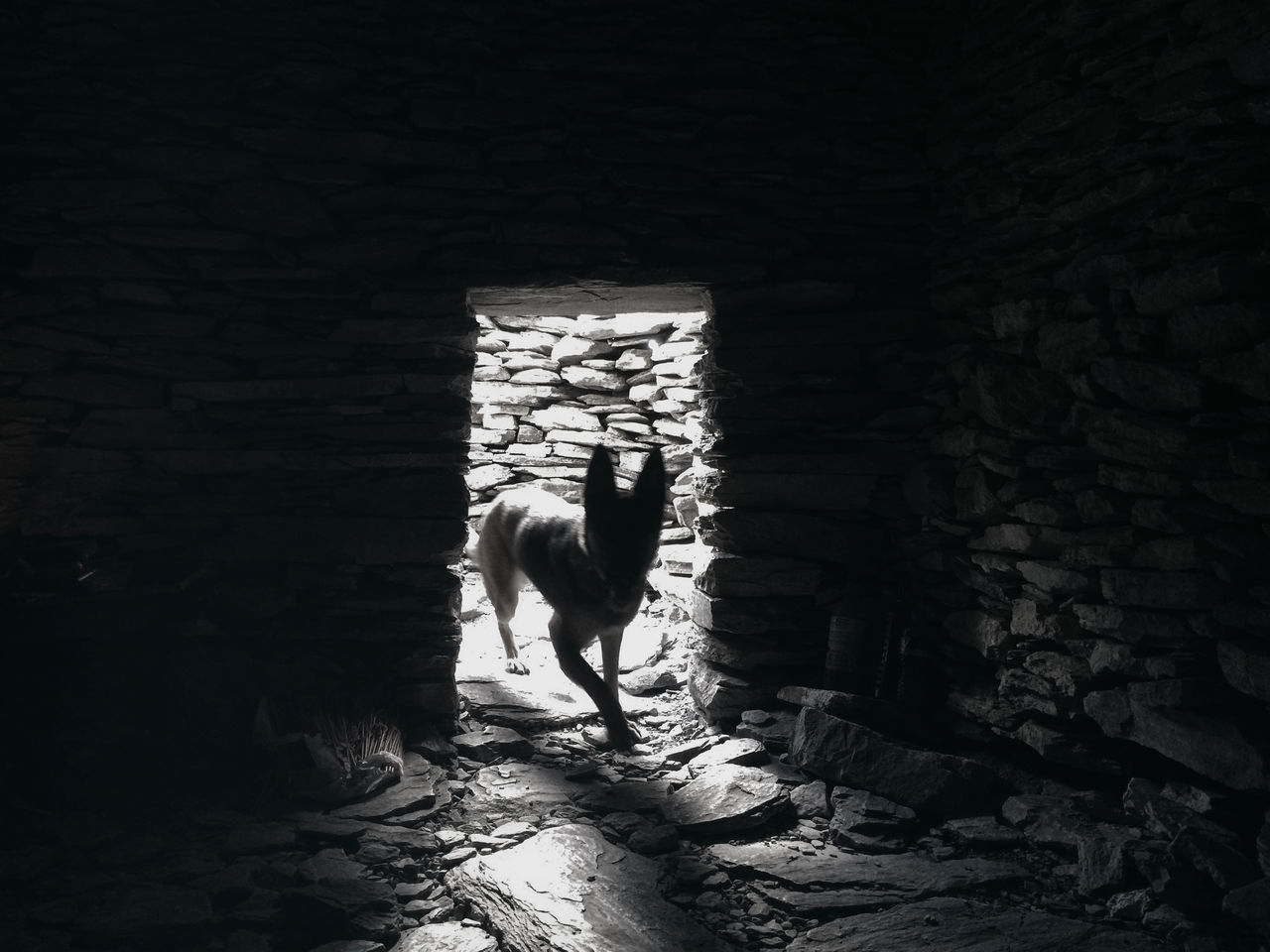 Blackandwhite Dog Monochrome Photography Tunnel Wild Wildlife