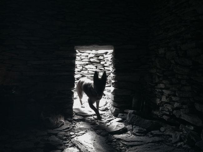 Blackandwhite Dog Monochrome Photography Tunnel Wild Wildlife