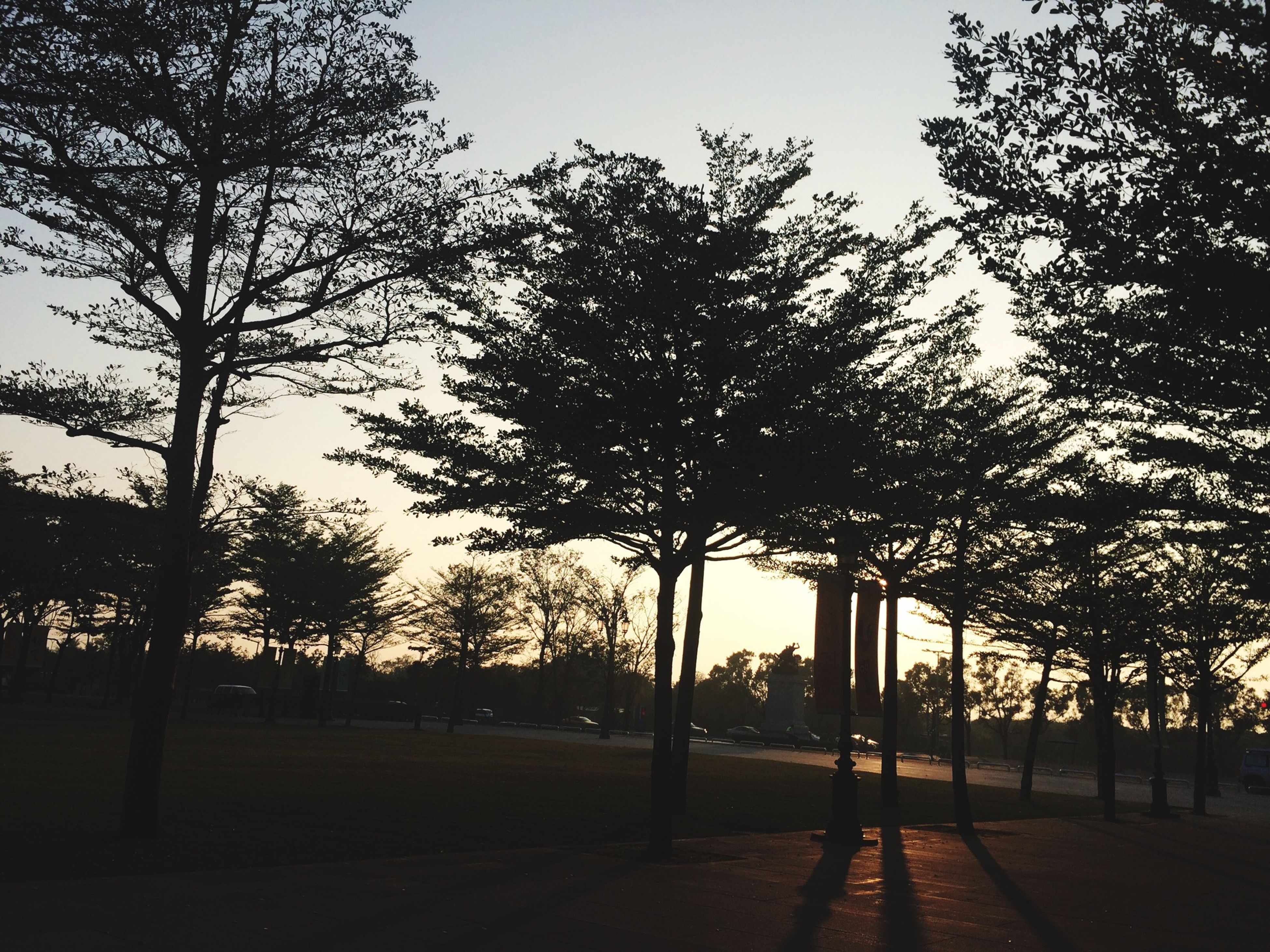 tree, silhouette, sky, park - man made space, tranquility, growth, branch, street light, nature, clear sky, sunlight, sunset, tree trunk, tranquil scene, shadow, outdoors, park, no people, built structure, beauty in nature