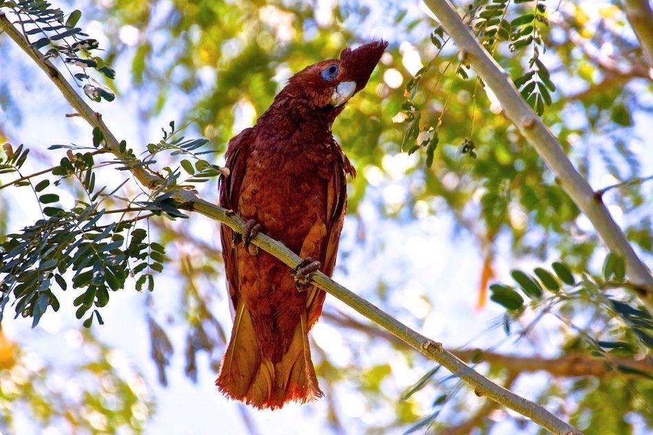 Beautiful stock photos of parrot, , Animal Themes, Bird, Branch