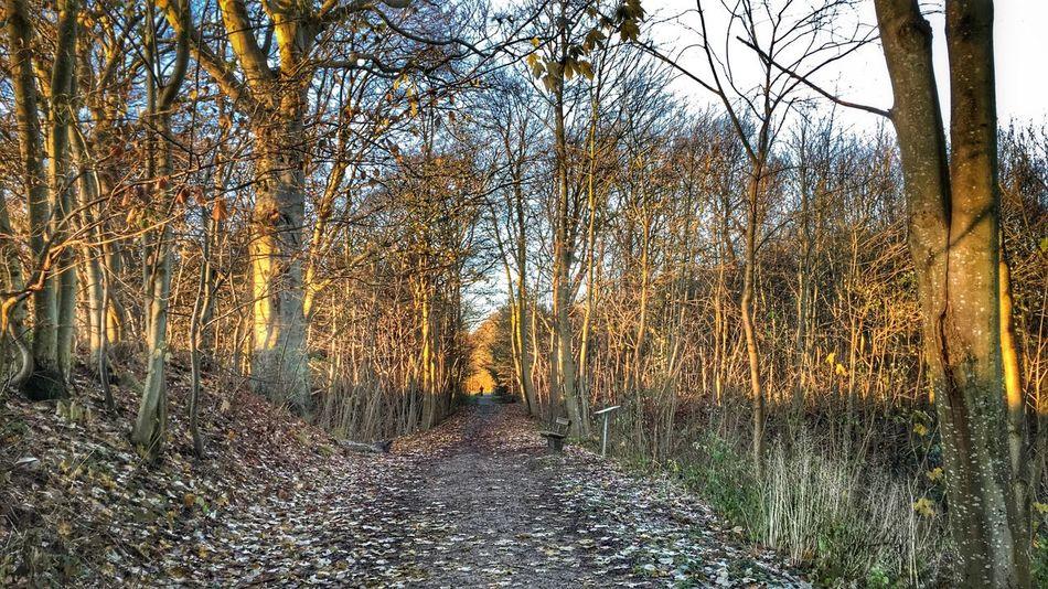 Sunny morning. Sunny Morning Forest Path Brabrand Sø Aarhus Denmark