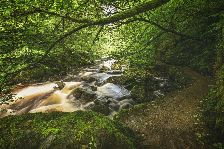 The East Lyn river and Hoar Oak Water meet at Watersmeet and flows down to the Bristol Channel at Lynmouth. Beauty In Nature Devon Devon UK Flowing Water Forest Keith Morgan Lynmouth Nature North Devon Rocks Tranquil Scene Trees Waterfall Watersmeet