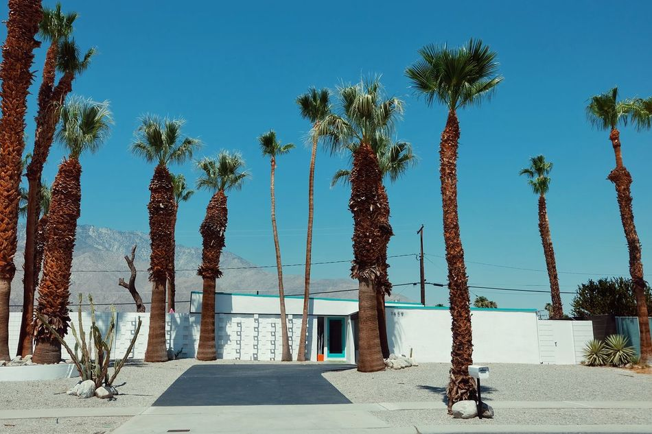 Oasis in the Desert Landscapes Architecture Midcentury Modern California Travel Summer