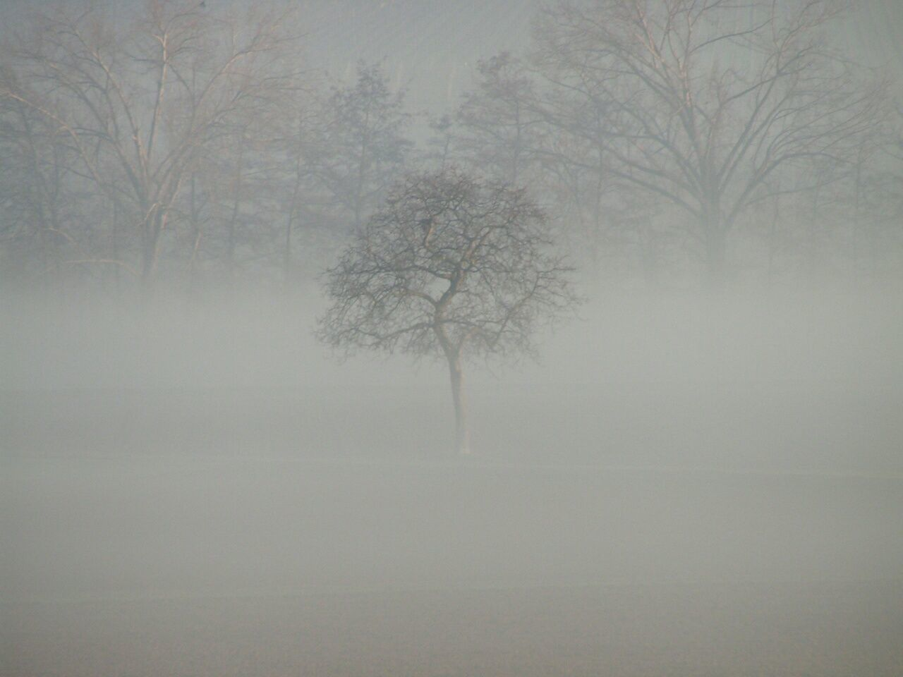 tree, tranquility, cold temperature, mist, beauty in nature, tranquil scene, bare tree, landscape, winter, nature, solitude, branch, lone, weather, fog, hazy, remote, outdoors, no people, scenics, day, sky