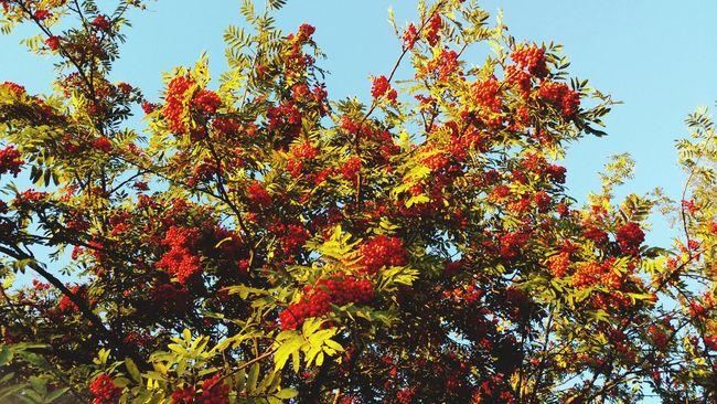 Autumn Tree Enjoying Life Taking Photos