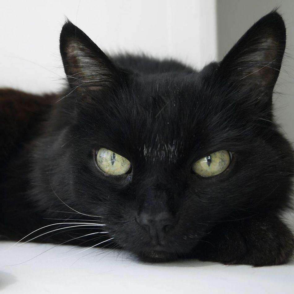 Day Cat Cats 🐱 Cats Of EyeEm Cat♡ BLackCat Blackcatlove