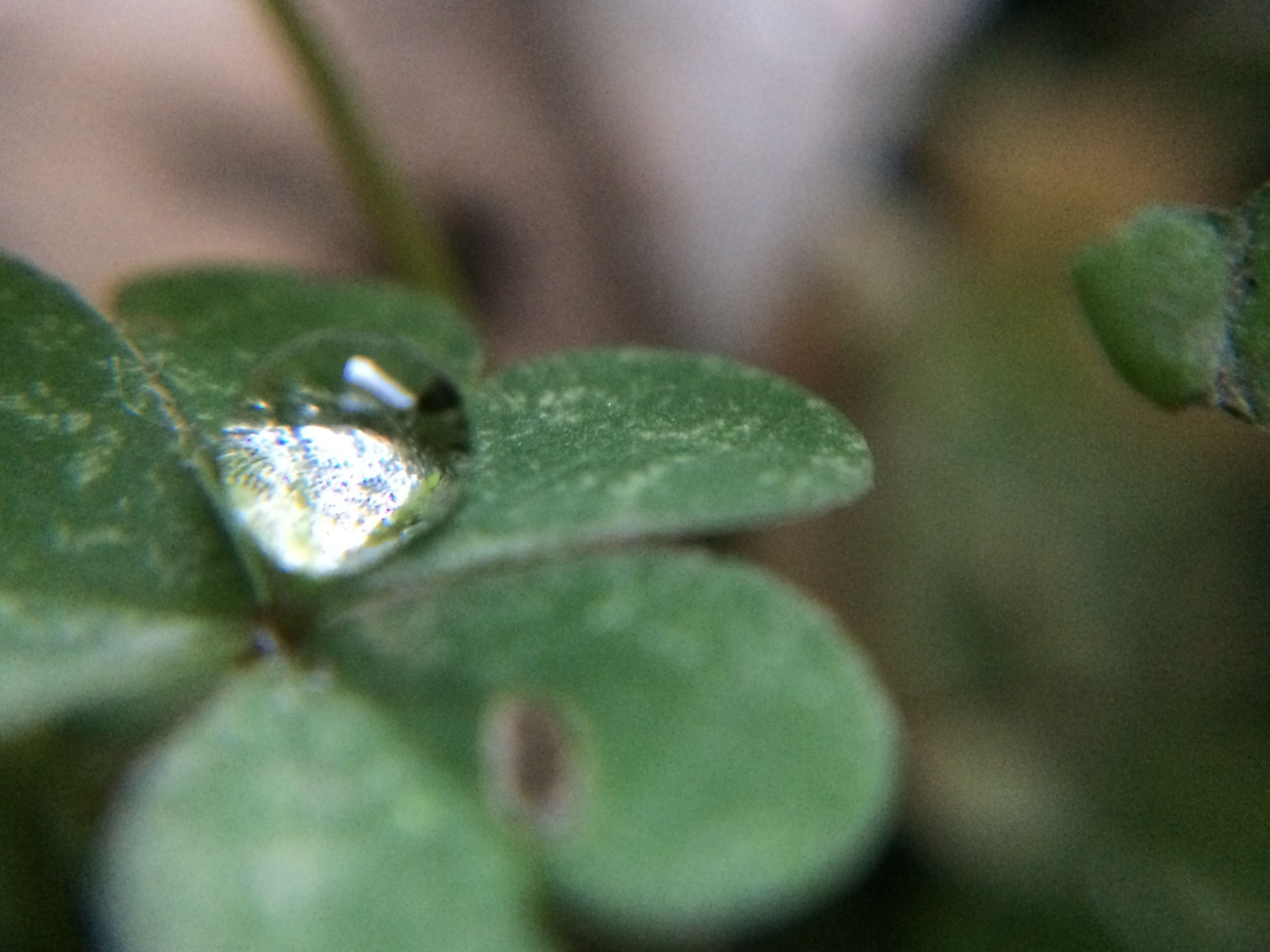 drop, water, close-up, growth, wet, freshness, leaf, green color, selective focus, plant, fragility, dew, nature, beauty in nature, focus on foreground, raindrop, water drop, purity, droplet, macro