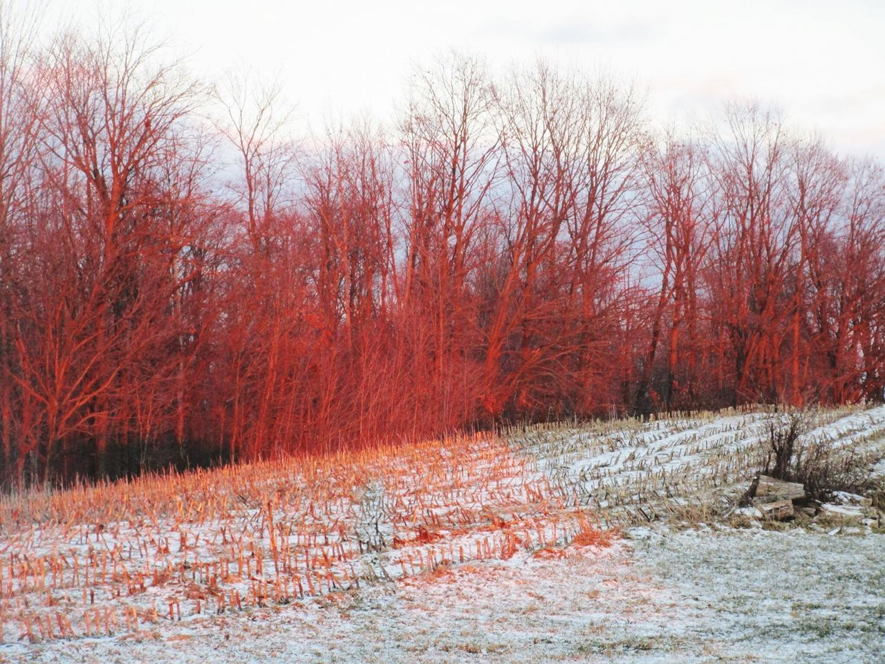 Tree Trees Cornfield Snow Cold Temperature Winter Wintertime Sun Sunset Sunset✨trees✨ Orange Color Reflection Outdoors Bare Tree Nature Tranquility No People Scenics Beauty In Nature Tranquil Scene Nature On Your Doorstep Michigan United States Pure Michigan Winter 2017