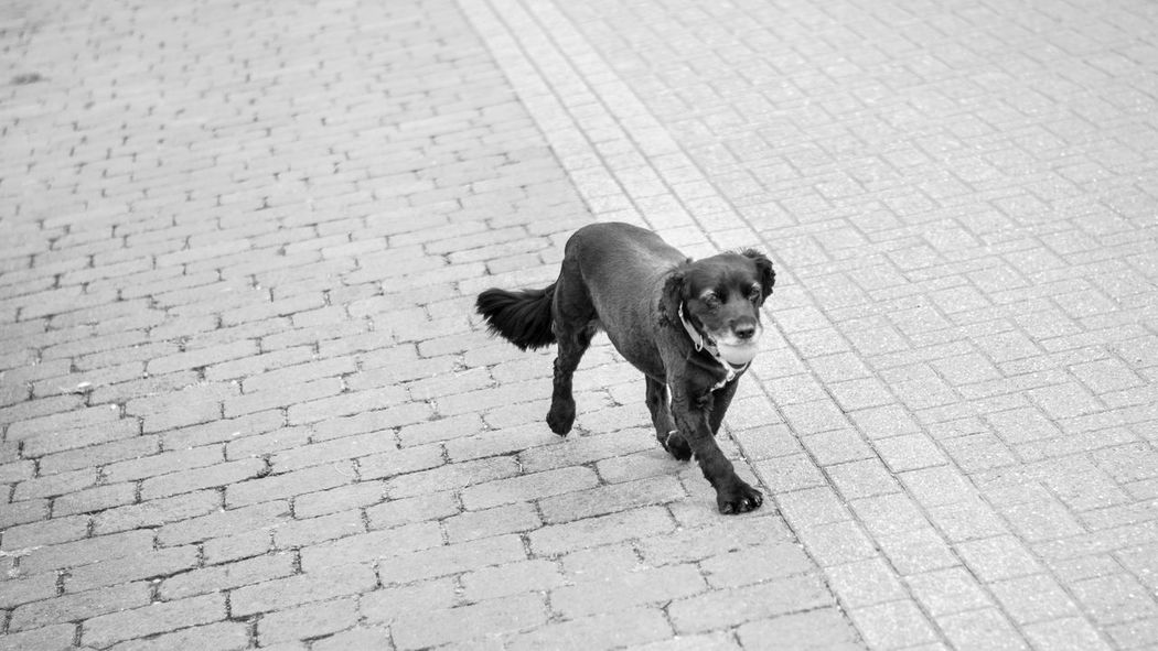 Black Color Day Dog Domestic Animals Footpath Full Length Mammal No People Outdoors Pavement Pets Portrait