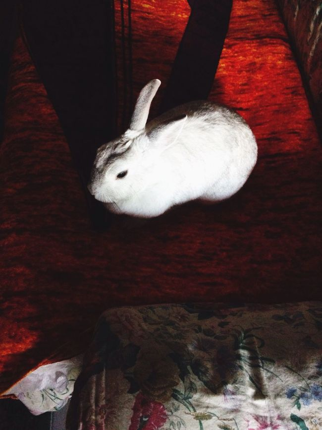 Panna my lovely rabbits First Eyeem Photo