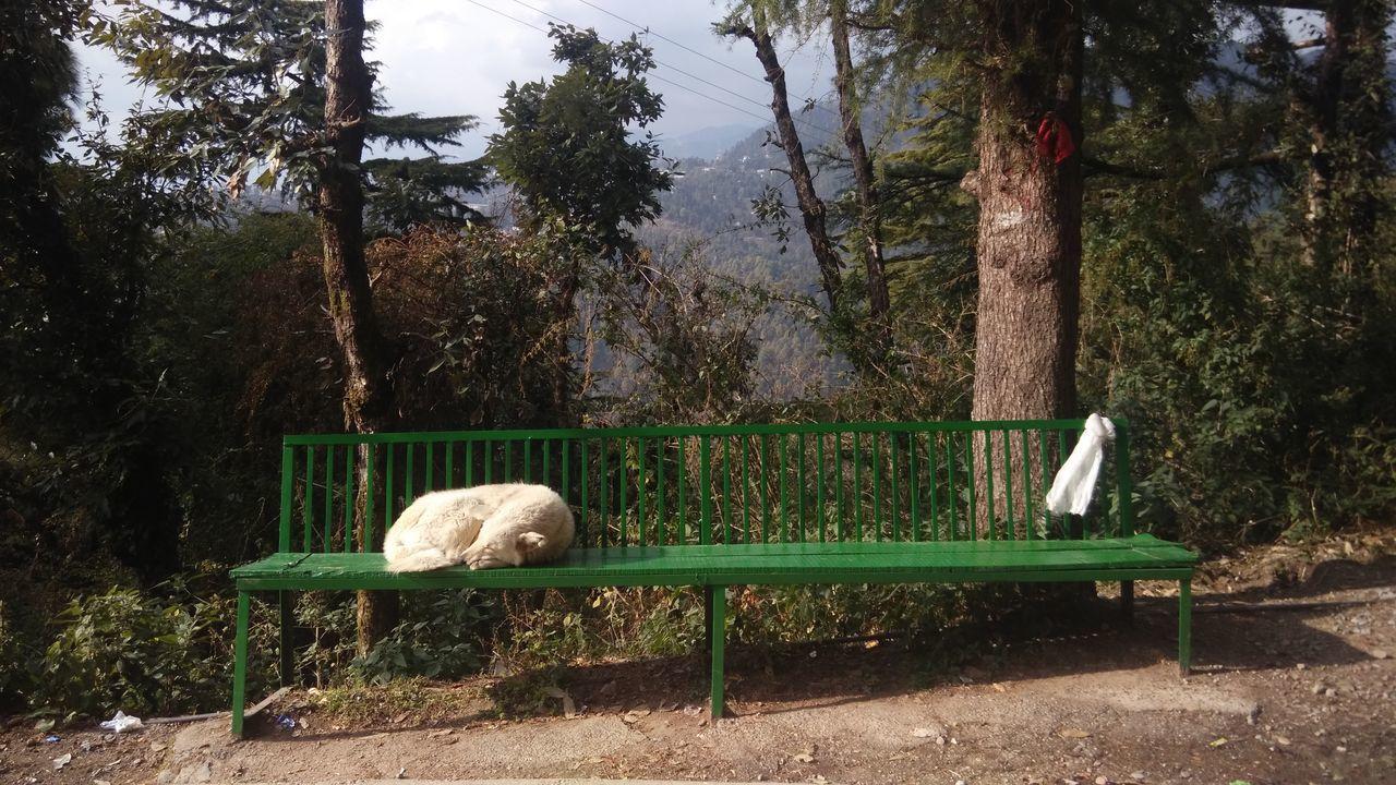Relaxing Dog Enjoying Life Hanging Out On The Road Animal in Maclodganj Daramshala India