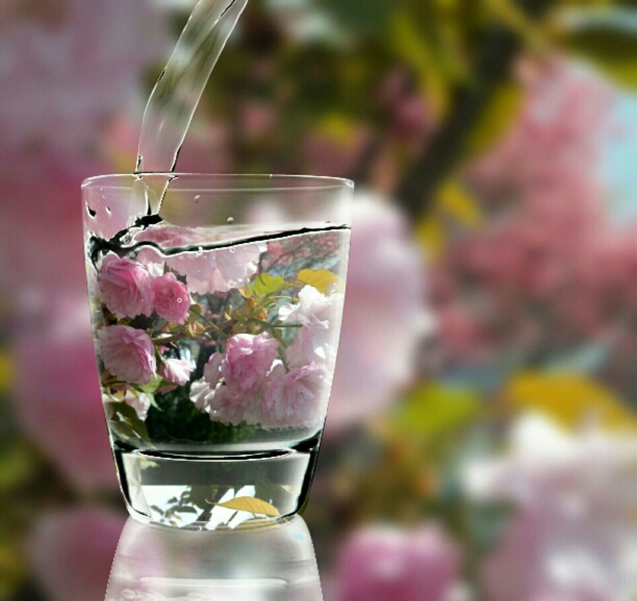 Wateringflowers Pip Pinkflowers Pour Refreshed Glassofwater Pipcamera EyeEm Hd Wallpapers Webdesign Screensaver