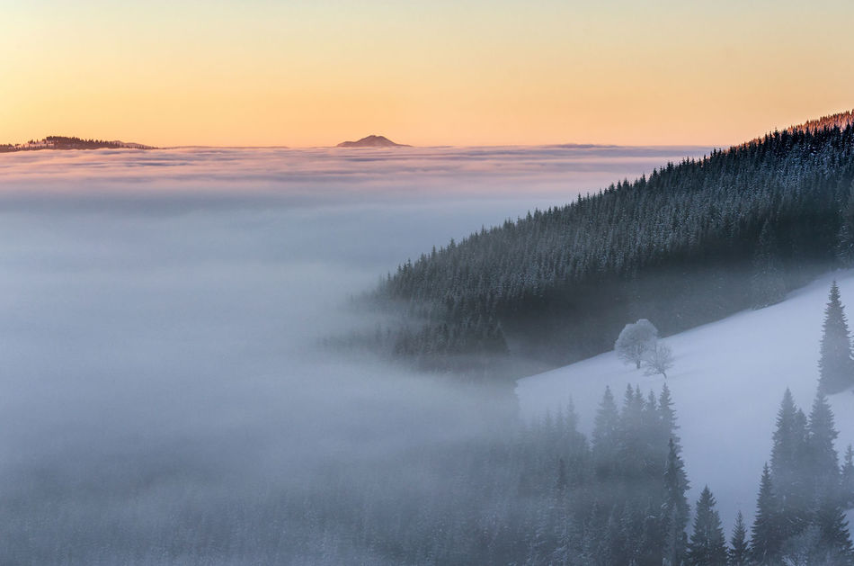 Foggy sunrise in Rodnei Mountains Abstract Beauty In Nature Cold Temperature Day Fog Foggy Foggy Morning Idyllic Landscape Mountain Nature No People Outdoors Scenics Silence Sky Snow Sunrise Tranquil Scene Tranquility Tree Winter