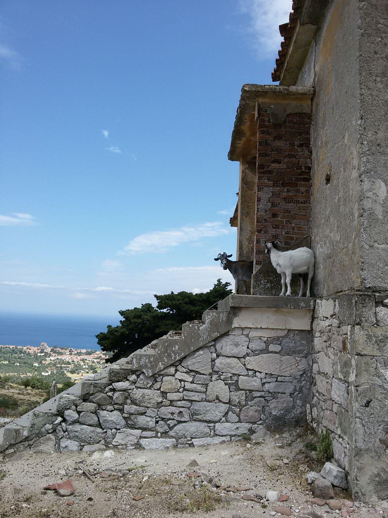Greece Greece Goats Goats Life No People Goats Lesbos Island Lesbos