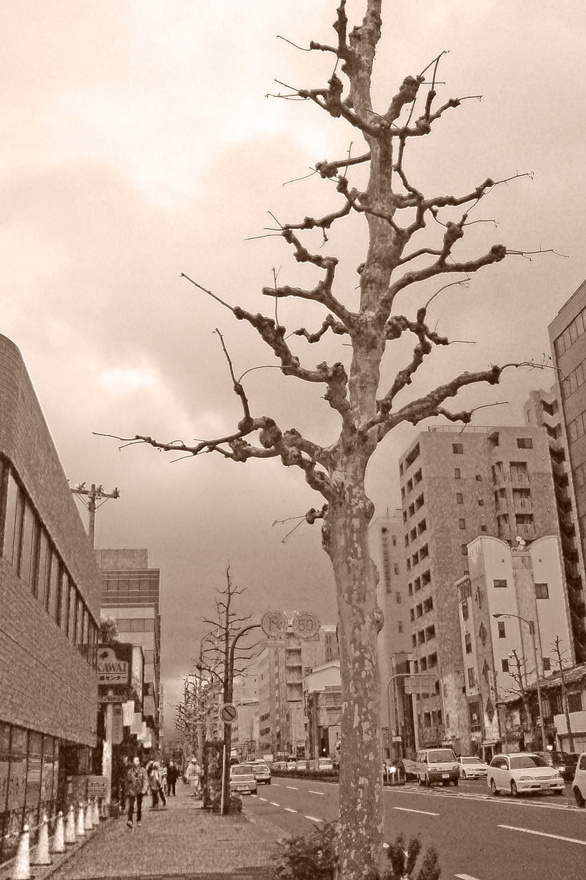 building exterior, architecture, built structure, city, bare tree, tree, outdoors, street, city life, road, day, sky, skyscraper, branch, no people, nature