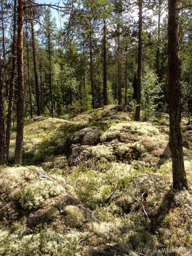 Wood In Sweden