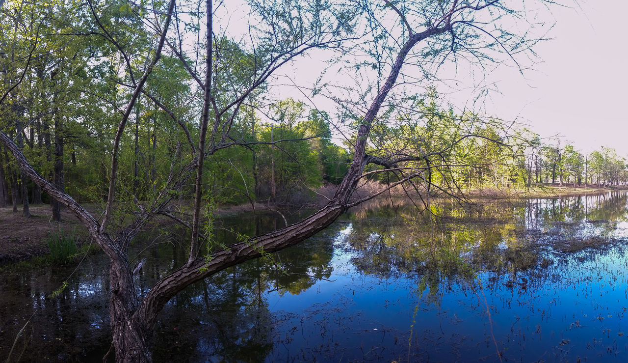 Beautiful stock photos of texas,  Beauty In Nature,  Day,  Growth,  Horizontal Image