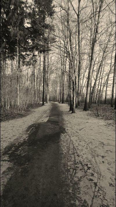 I'm waiting for You... Trees Tree_collection  Gorzów Wielkopolski Poland The Great Outdoors - 2016 EyeEm Awards