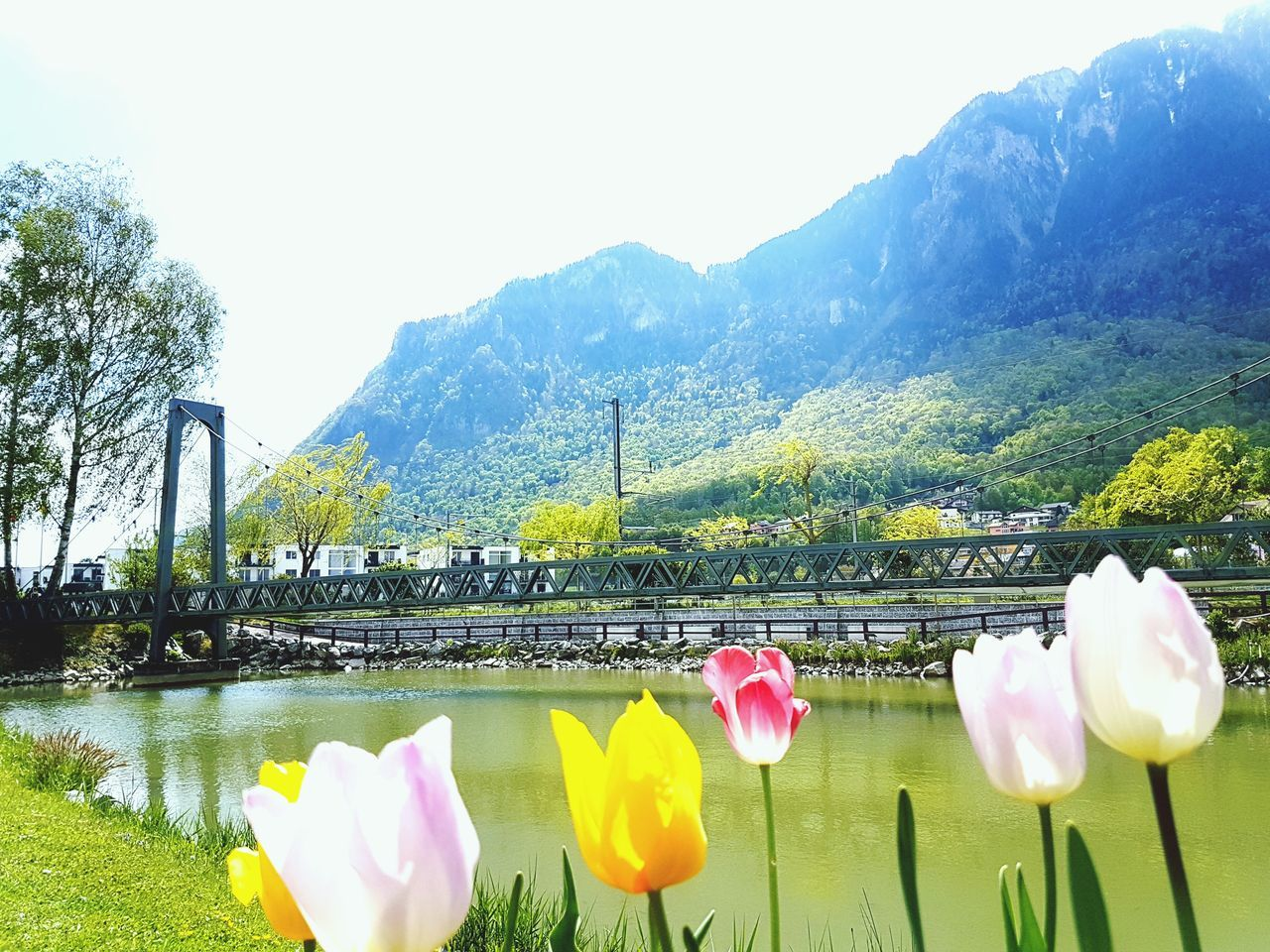 Outdoors Scenics Nature Water Flowers Flower Head Railway Bridge Tulips Tulip Beauty In Nature No People Clear Sky Lake With Mountains Switzerland Lake Geneva Region The Great Outdoors - 2017 EyeEm Awards