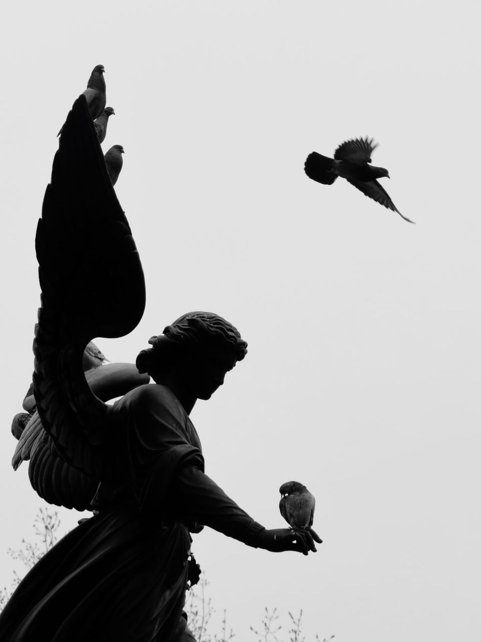 Angel Angel Statue Statue Rock Sculpture Sculpture Bird Birds Rock Pigeon Rock Pigeons Pigeons Low Angle View Flying Wings God's Beauty Grey Sky Blackandwhite Photography Black And White Black & White Angel Wings Bird Wings Central Park Central Park - NYC Manhattan