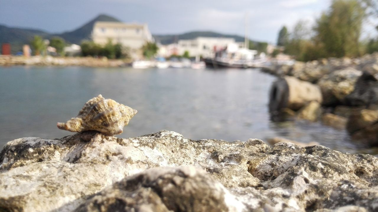 Sea Shell Bay Seaside Blurry Background Focus On Foreground Shell On The Beach Maximum Closeness