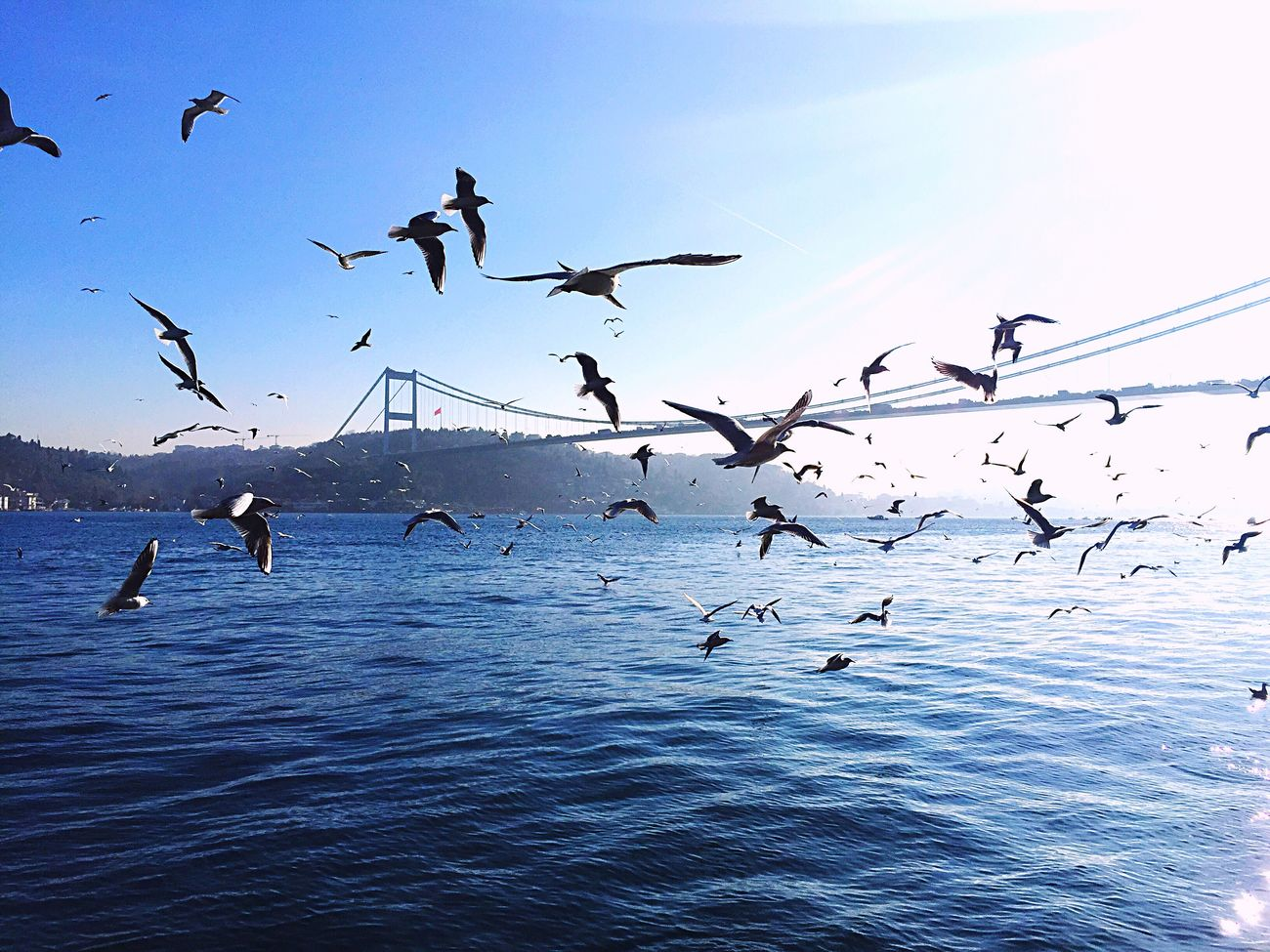 Enjoying The Sun Bosphorus Istanbul Istanbuldayasam Sea Sky Sea And Sky Birds Bridge Istanbullovers Walking Around OpenEdit Eye4photography  EyeEm Nature Lover EyeEm Best Shots EyeEmBestPics EyeEm Gallery Relaxing Fall Beauty