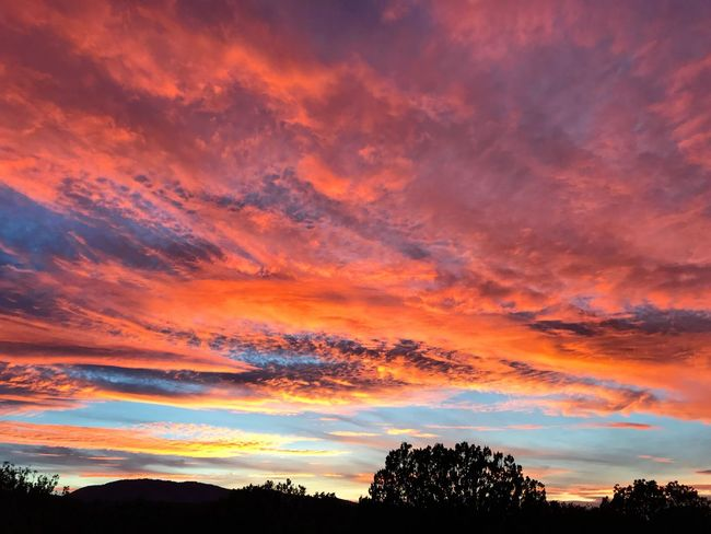 """""""Glory Nights"""" A stunning Central New Mexico sunset glorifies the evening sky. New Mexico Skies New Mexico Photography New Mexico Evening Sky Sunset_collection Silhouettes Sunsets Sunset Beauty In Nature Orange Color Scenics Tree Tranquil Scene Silhouette Dramatic Sky Sky Cloud - Sky"""