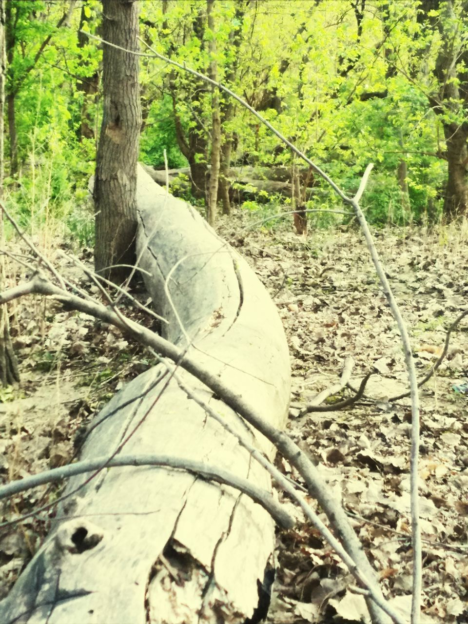 tree, day, no people, tree trunk, nature, forest, outdoors, close-up