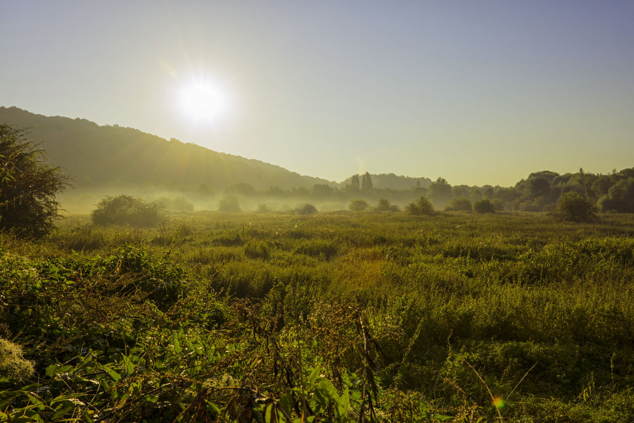 Clear Sky Eye4photography  EyeEm Foggy Foggy Morning Green Landscape Landscape_Collection Nature Nature Photography Nature_collection Nikonphotography Outdoors Photography Shootwithcamerasnotwithguns Sunrise Tranquil Scene Tranquility