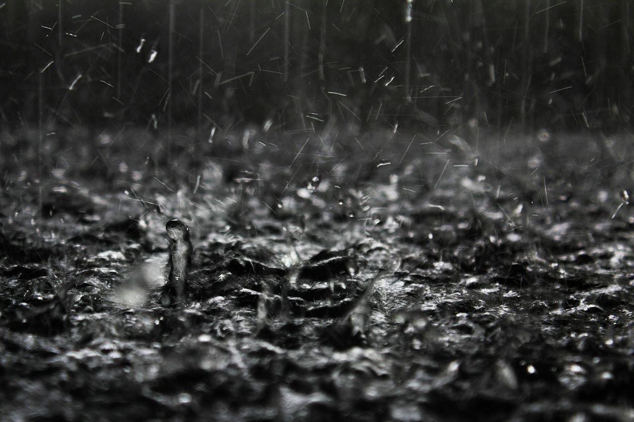 Rain Water Tranquil Scene Autumn Black And White Full Frame EyeEm Best Shots Getting Inspired Bokeh Photography Blurred Motion Monochrome Photography capturing motion