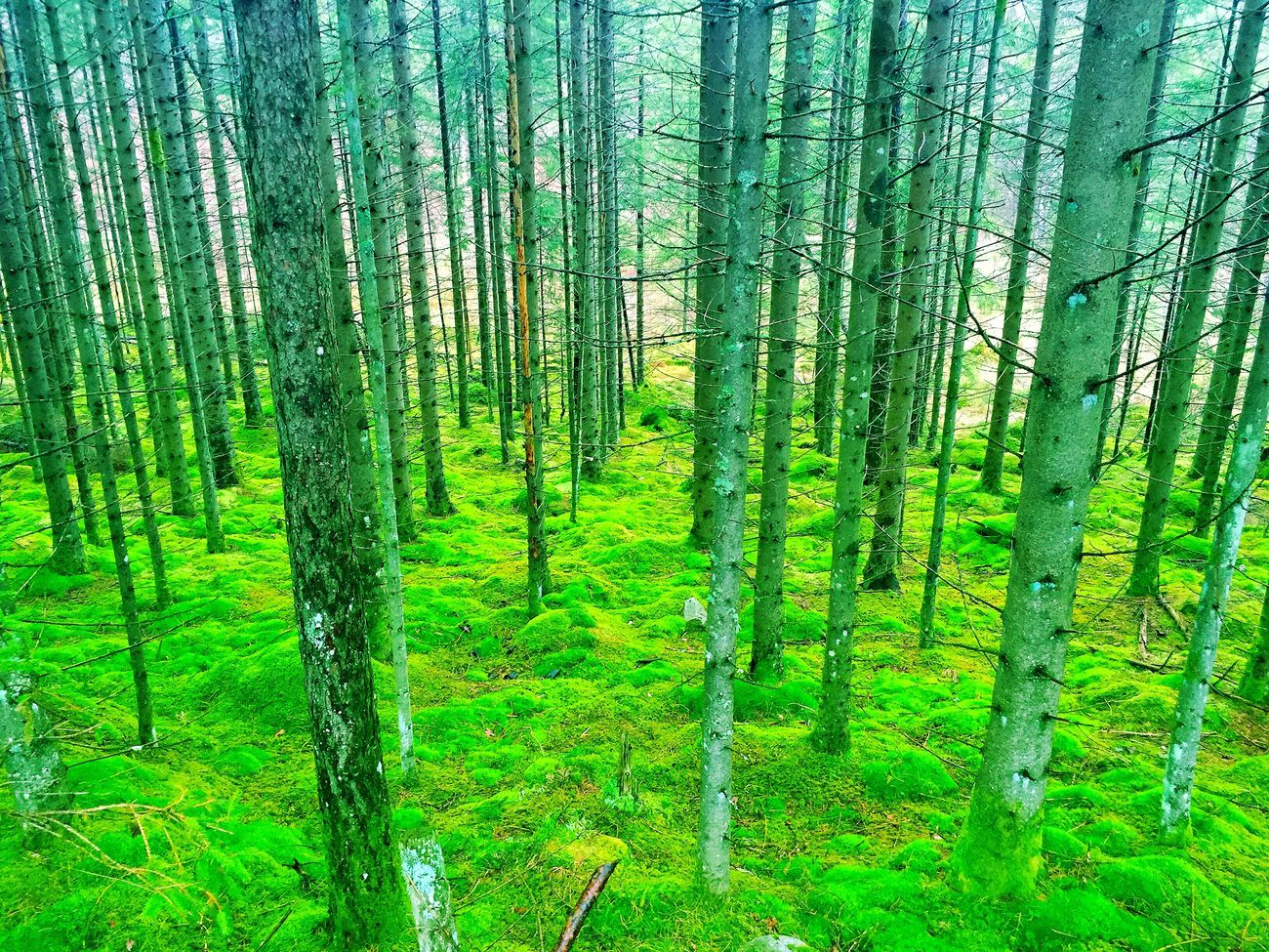 Norwegian forrest 🌲🌲🌲 Forrest Trees Moss Norway Oanes Forsand Norge Hike Hiking Wood Woods