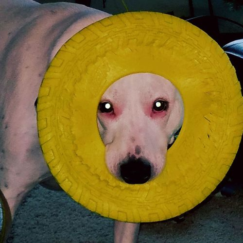 EyeEmNewHere Pet Collar Happiness Dog Toy Play Silly