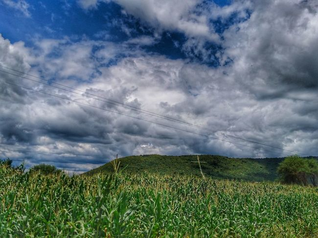 Cross on the hill Cloud - Sky Agriculture Field Nature Dramatic Sky Rural Scene Growth Beauty In Nature Landscape Day Crop  Sky Outdoors Freshness No People Storm Cloud Tranquility Grass Scenics Cereal Plant Cross Hills Corn The Week On EyeEm EyeEmNewHere Perspectives On Nature