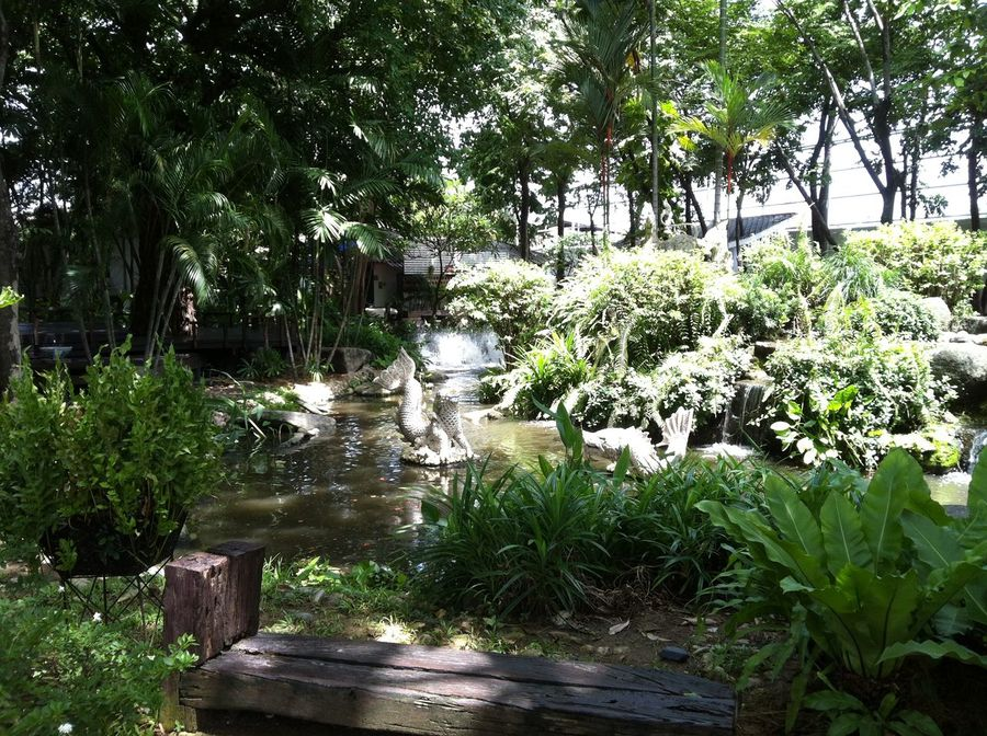 Gardens in Bangkok, Thailand 2012 Beauty In Nature Day Green Color Growth Nature No People Outdoors Plant Tree