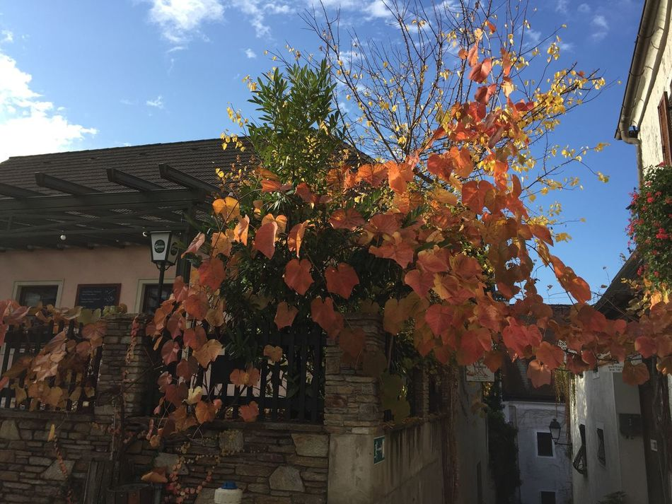 autumn Autumn Leaves Autumn Autumn Colors Tree House Day Nofilter No People Nature Beauty In Nature Outdoors Beautiful ♥ Beautiful