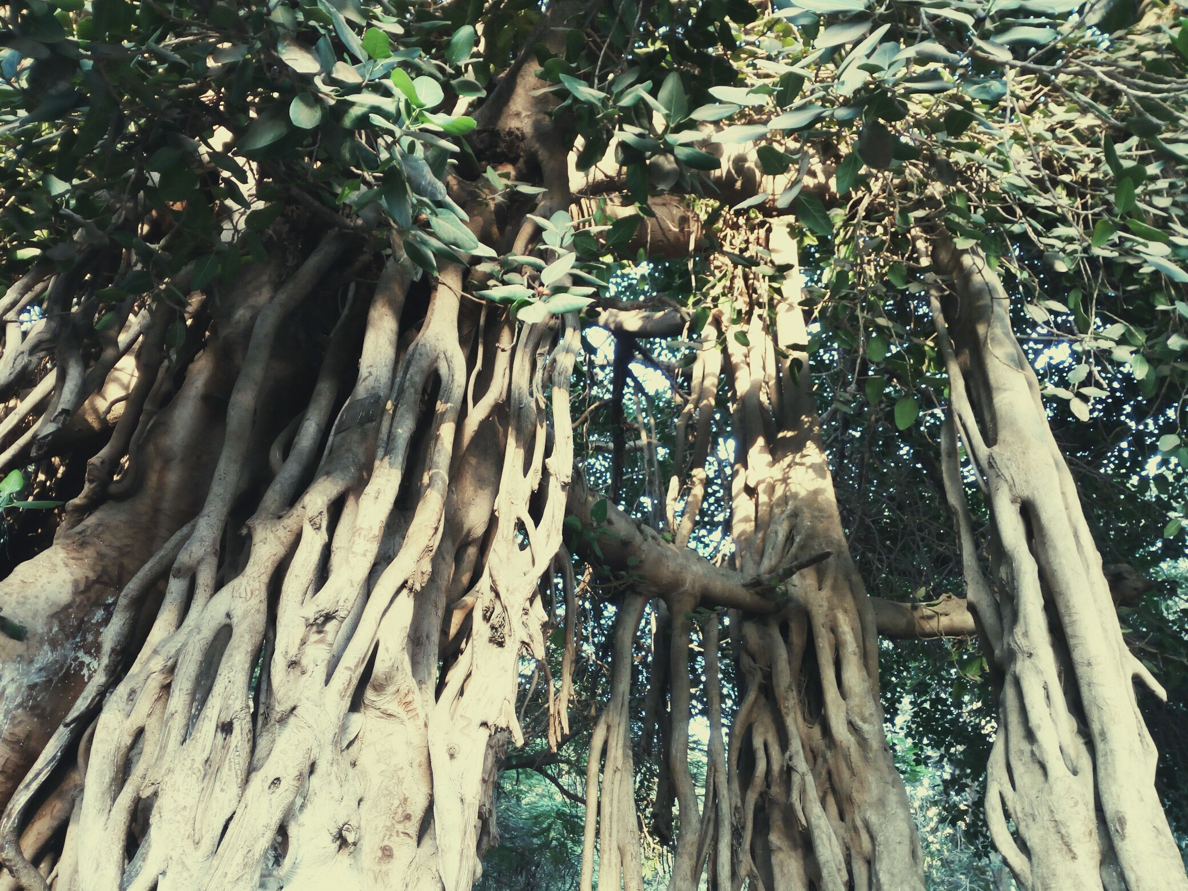 tree, growth, nature, tree trunk, no people, beauty in nature, outdoors, day, branch