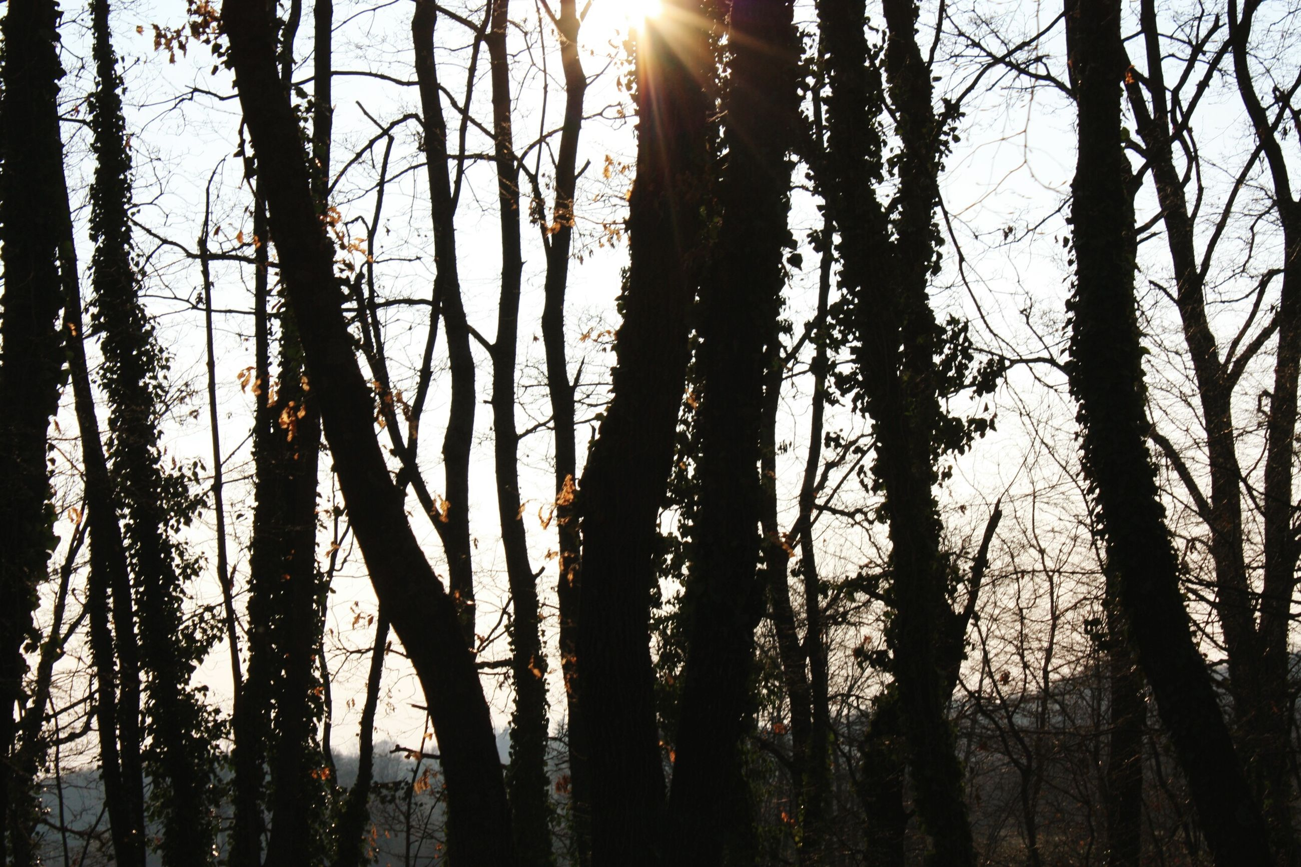 Creative Light And Shadow Nature Forest Sunset Trees Peaceful
