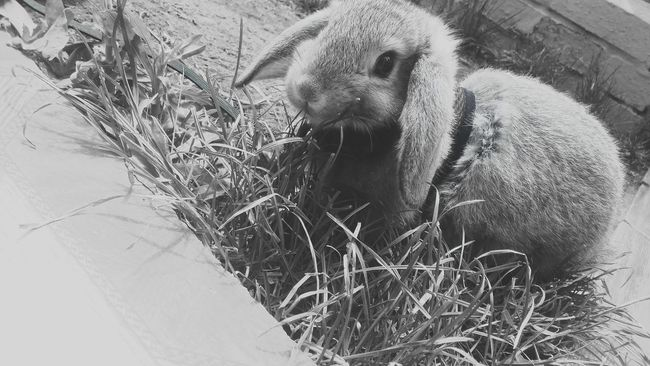 Animal Themes EyeEm Gallery Gallery Photography Gallery Rabbit ❤️ Cute Rabbit Animal Domestic Animals