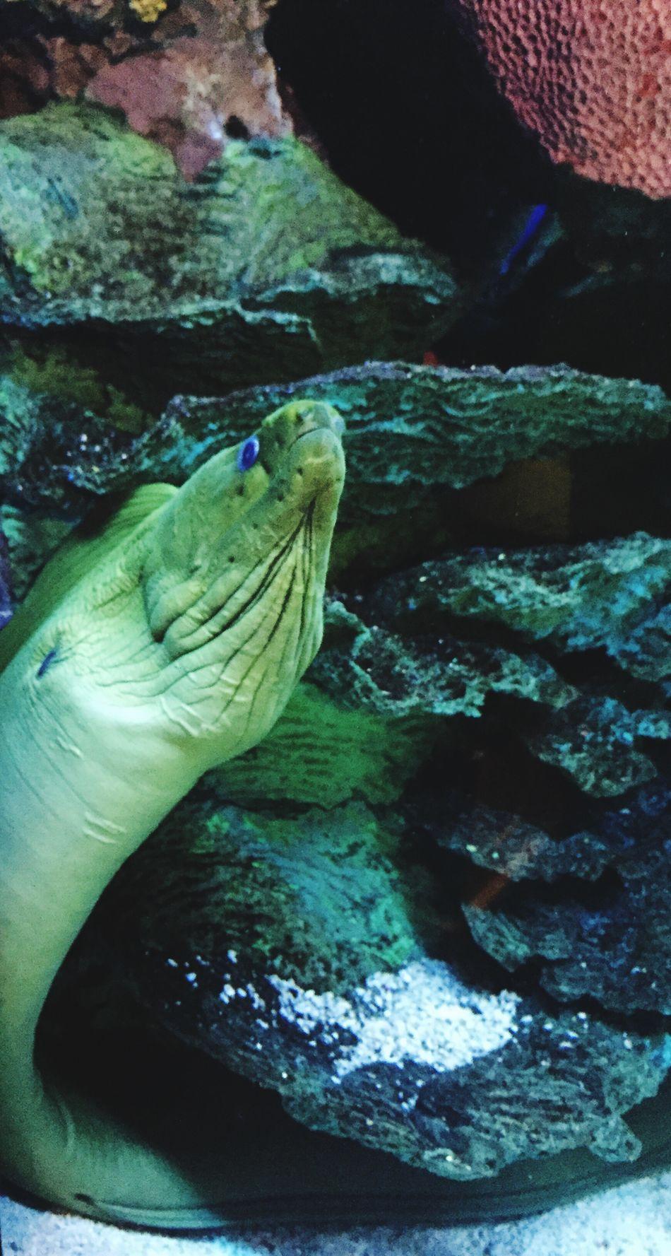 Sea Life Underwater Water Oceancreatures Eel Sealife Upclose