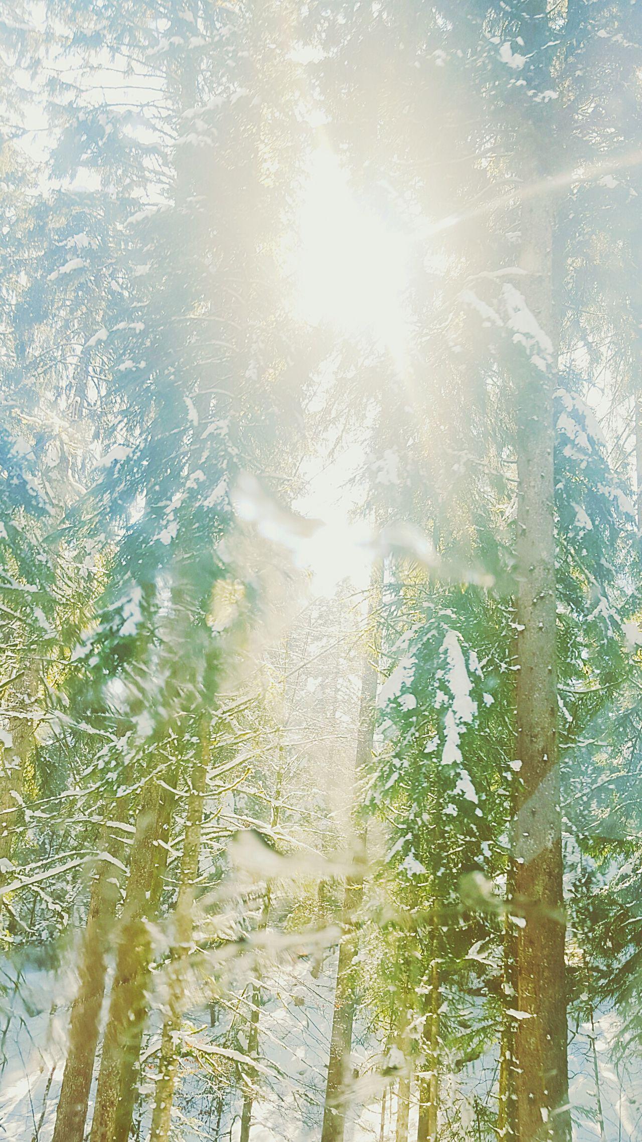 Hood Sapins Nature Neige Jura Sun Relaxing InTheRoad Inthehood LoveNatureAndMountain