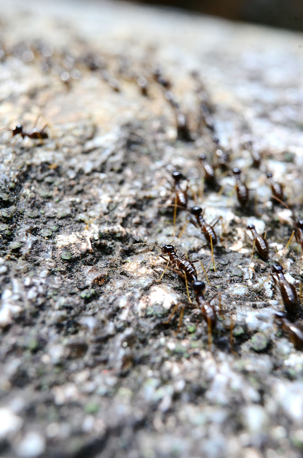 Ant Animal Themes Insect Animals In The Wild Colony Animal Wildlife Outdoors Large Group Of Animals Nature Close-up Day No People Group Of Animals Insects  Ants Beautiful ♥ Cats 🐱 Plants 🌱 TreePorn Deadwood  Trees Tree Trunk Naturelovers Nature Photography Nature_collection