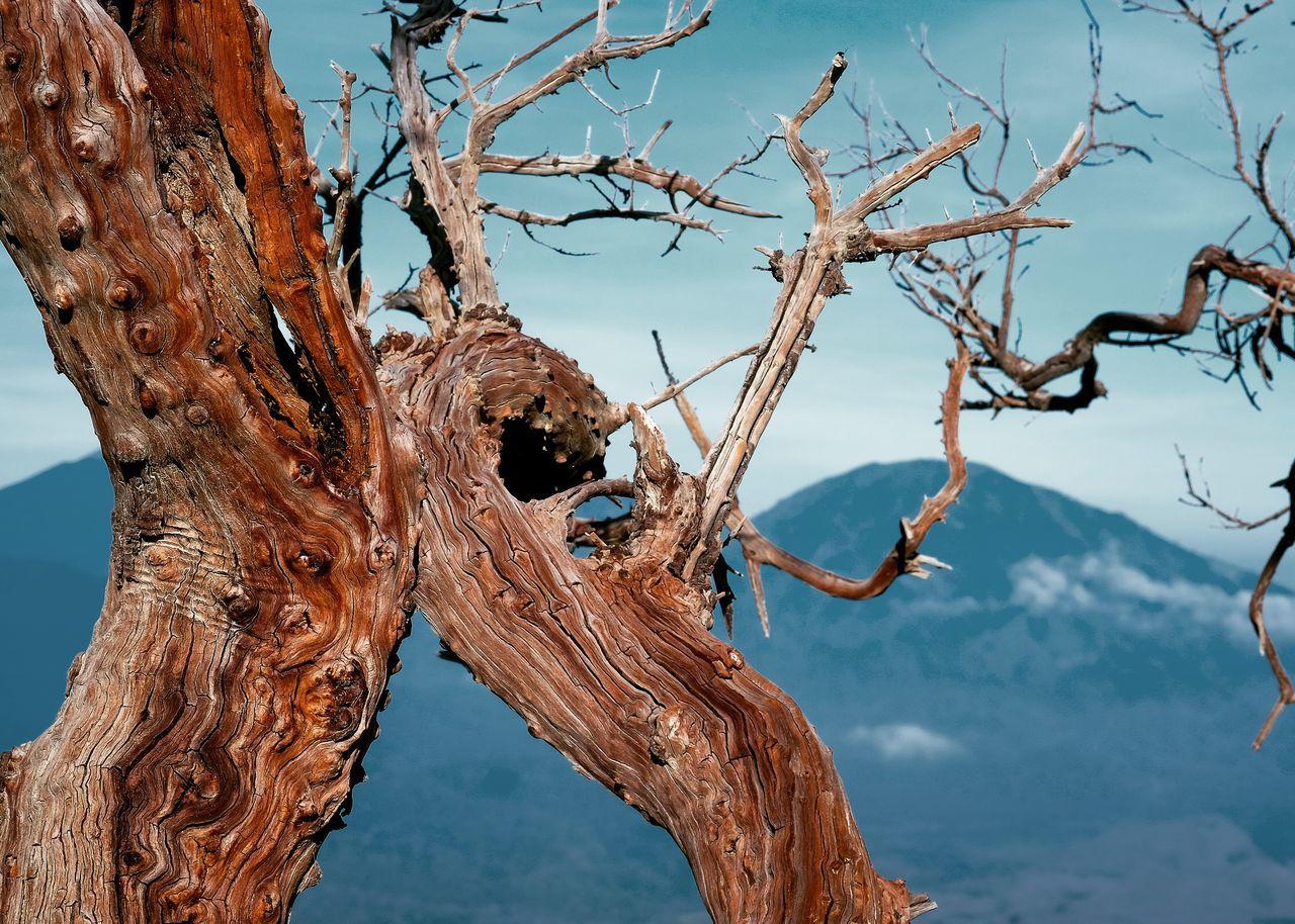 Bark Bark Texture Trees Mountains Bluesky Sky