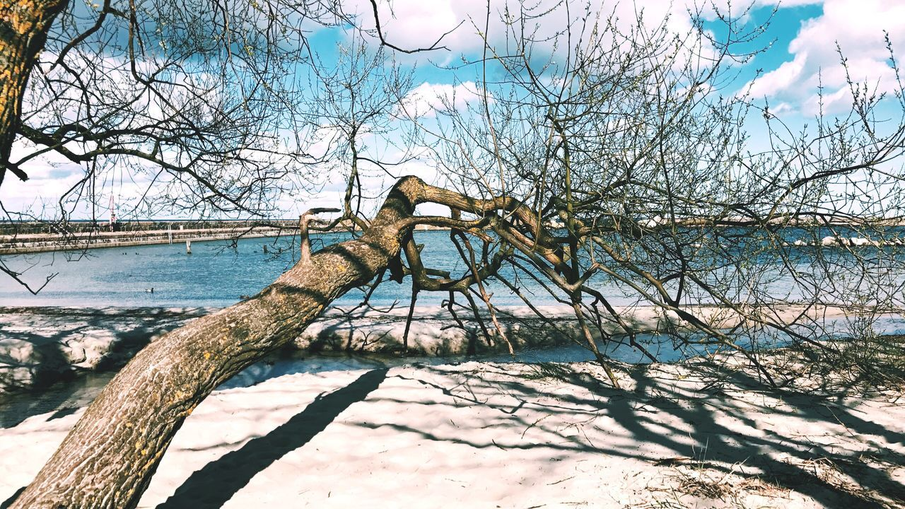 Too cold still Tree Bare Tree Branch Sky Nature Outdoors No People Day Water Lake Scenics Beauty In Nature Dead Tree Beachphotography Beach Sand & Sea